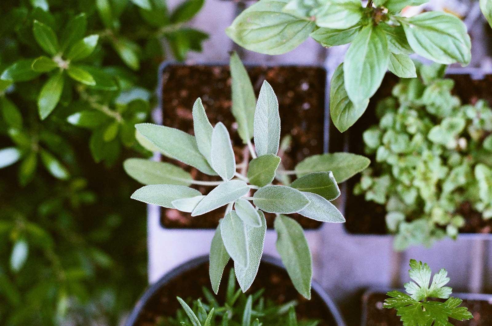 Herbs ideas for balcony garden