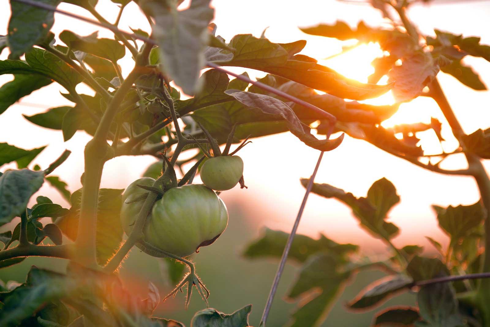 Right light for your balcony garden