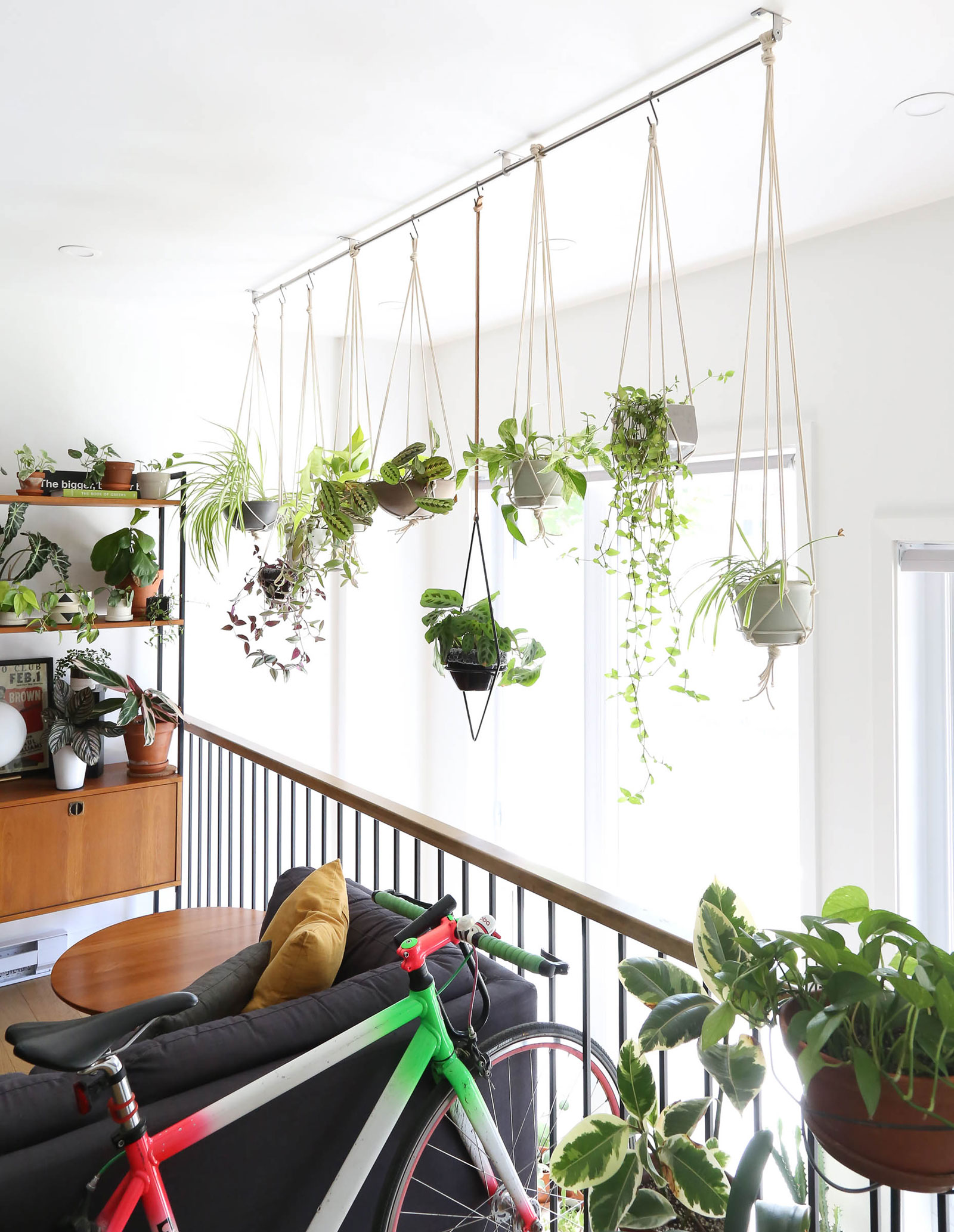 Interior full of indoor plants