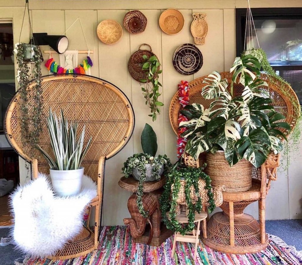 Houseplant collection by @idrinkandgrowthings_