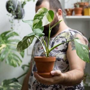 Jonathan_Lefrancois_house_plants_MARPHYL_ambassador