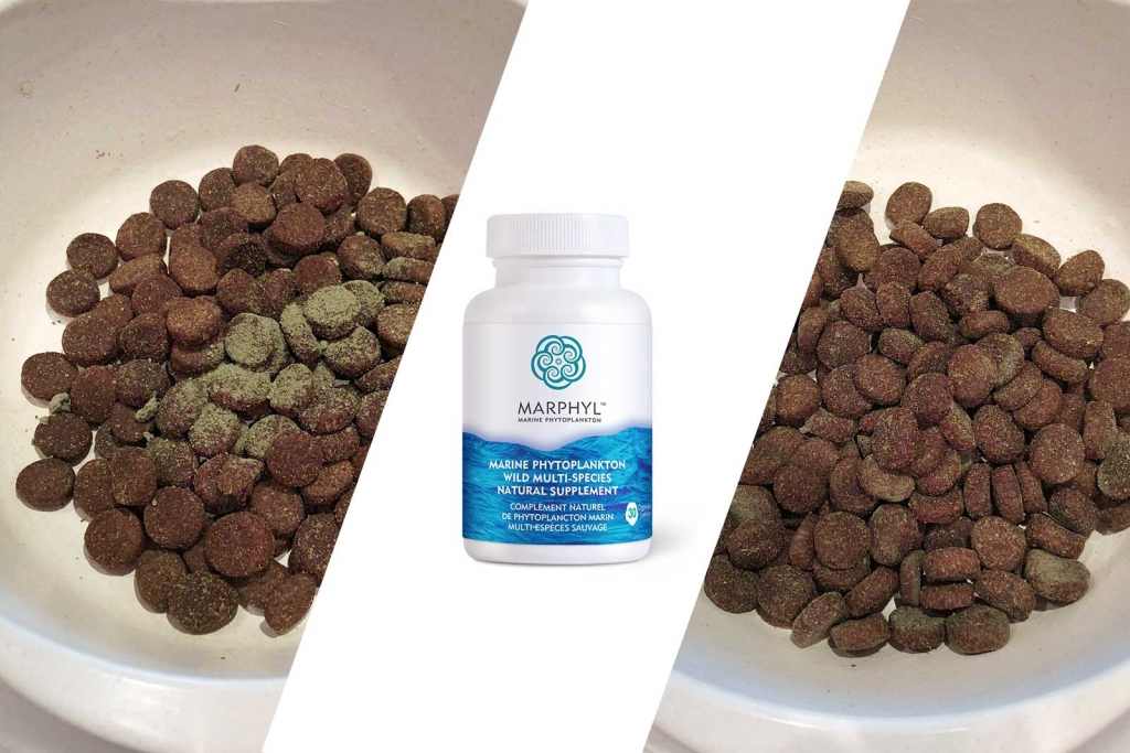 Add Phytoplankton to your dog's food