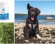 Reasons why Phytoplankton is good for dogs