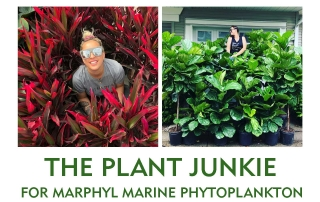 Izabela the plant junkie_ interview for marphyl marine phytoplankton