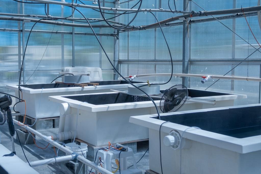 MARPHYL Marine Phytoplantkon Quality Control