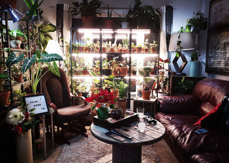 Interior design full of plants from Nicki from Plants pots and whatnots