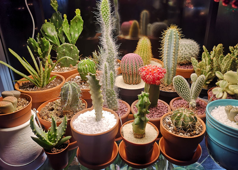 Cactus collection from Nicki from Plants pots and whatnots