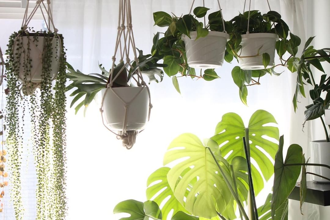 Indoor plant on pink background