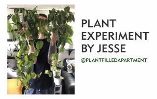 Jesse_plantfilledapartment_marphyl_experiment_TITLE