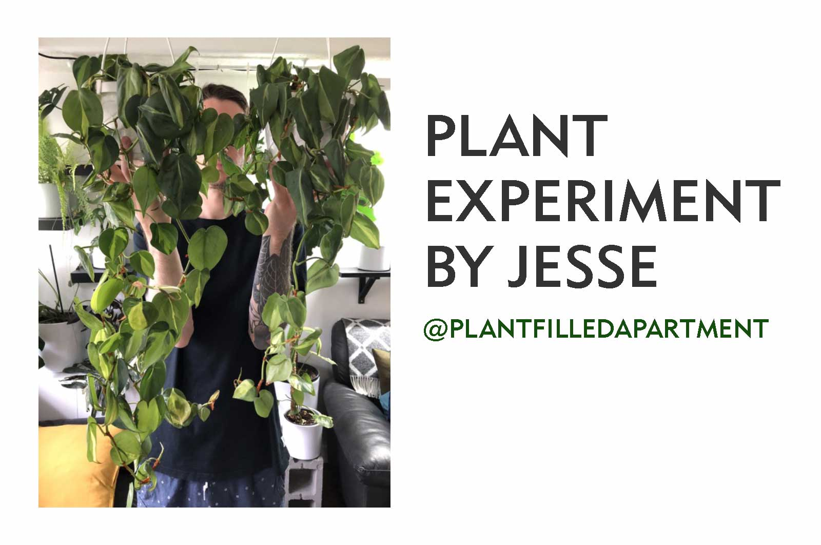 Jesse_plantfilledapartment_marphyl_experiment_TITLE
