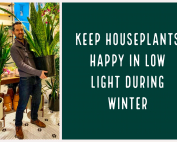 How to Keep Houseplants Happy During Winter