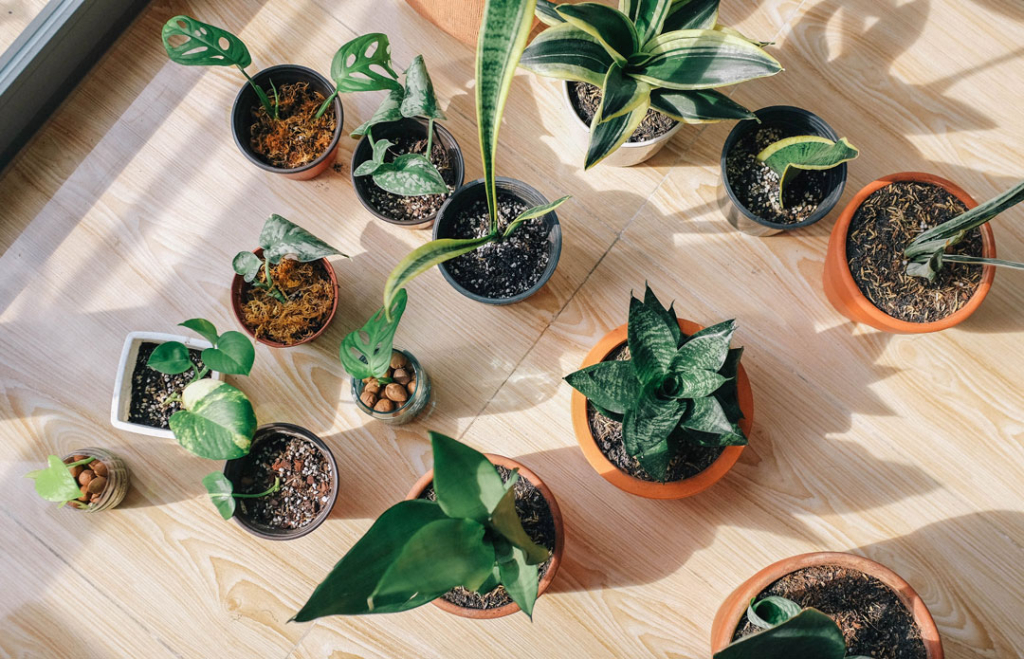 plants_winter_care_low_light