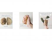 Sphagnum_moss_guide_littlenorthplants_marphyl