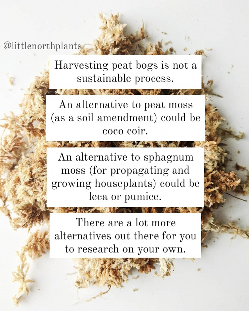 Sphagnum and peat moss alternatives