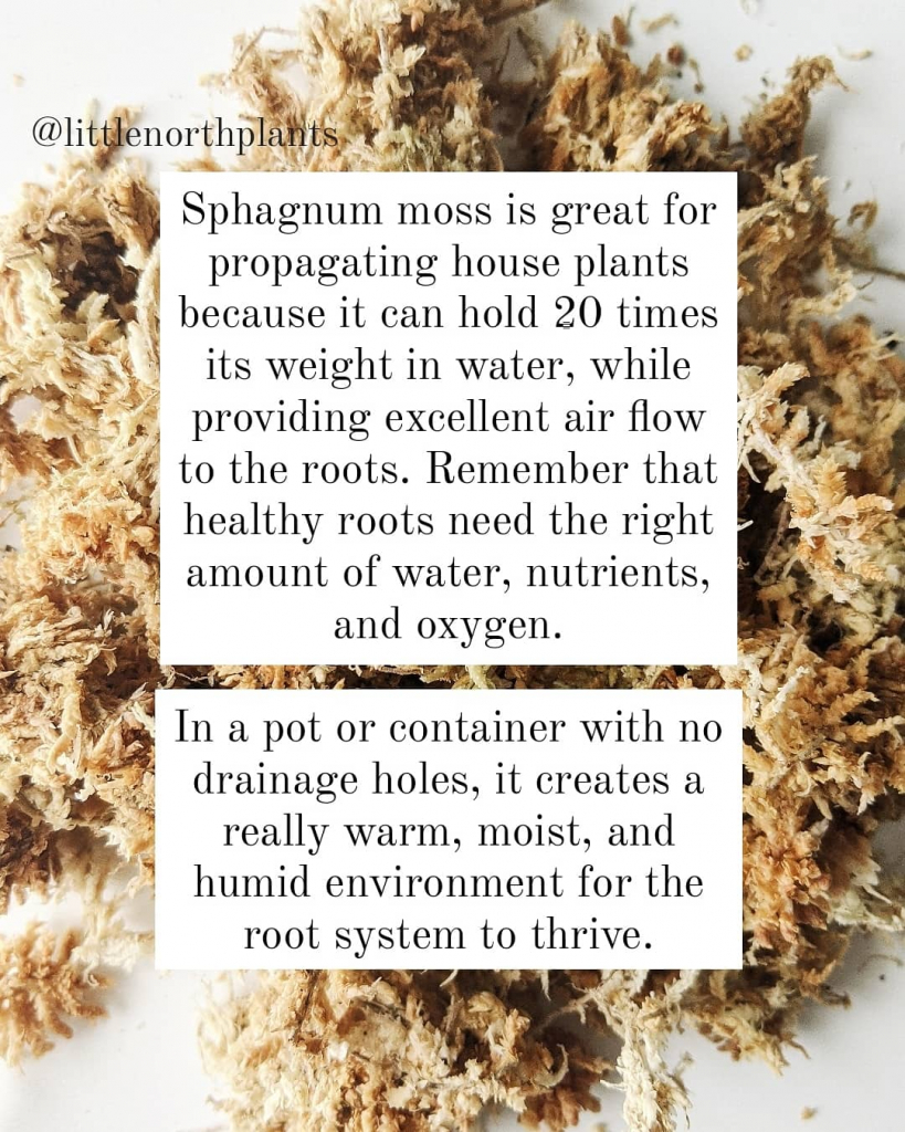 Sphagnum Moss is great for propagation