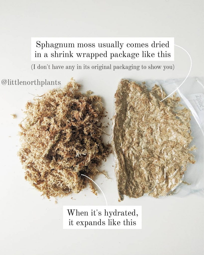 Dried vs Hydrated Sphagnum Moss